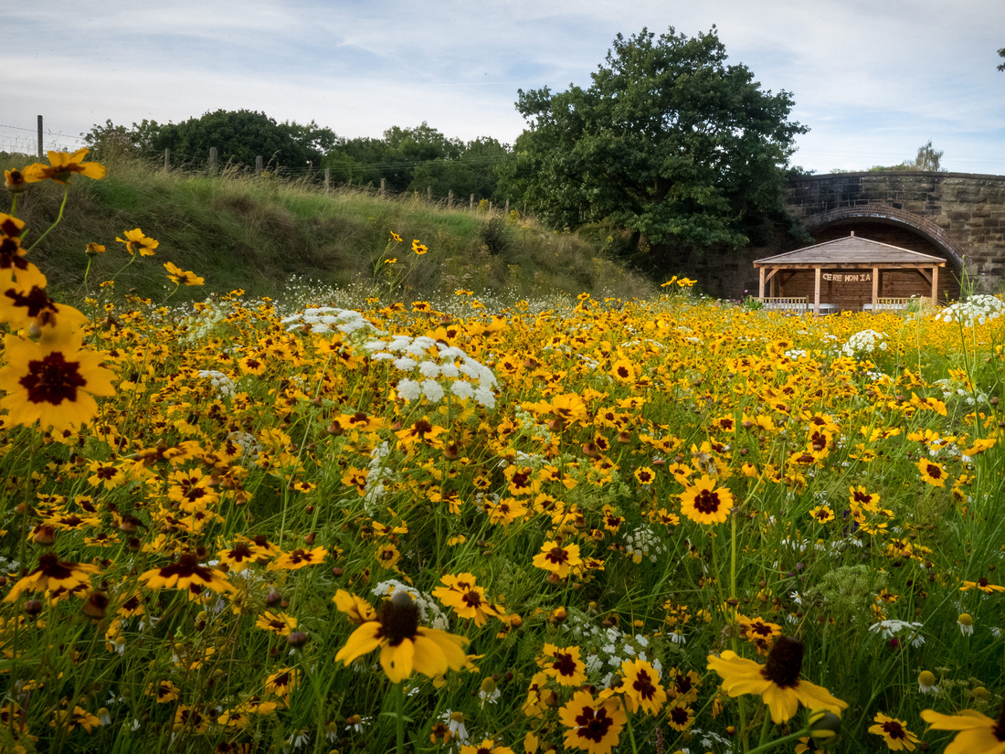 Colourful image of the field of flowers in the grounds of the wedding venue, Tower Hill Barns.